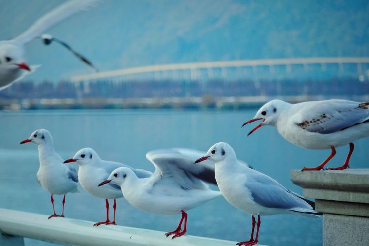 Seagulls against sea