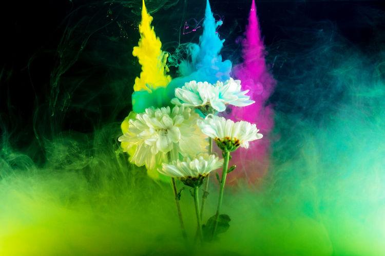 Flowers splashing powder paints over black background