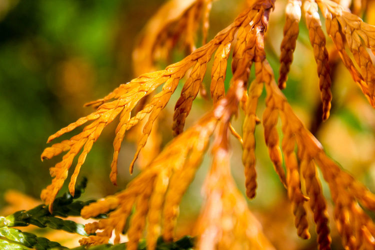 Beauty In Nature Close-up Day Fragility Freshness Growth Leaf Nature Outdoors