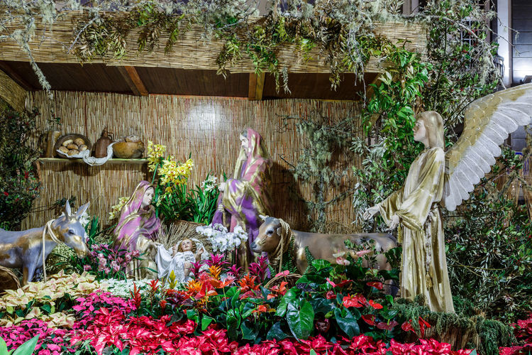Madeira Island Angel Animal Themes Baby Jesus Beauty In Nature Crib Crib Figurine Day Domestic Animals Flower Freshness Growth Nature No People One Animal Outdoors Pets Plant Shepherds Statue Tree