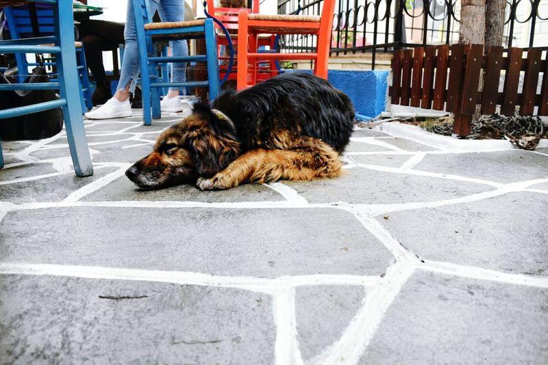 Dog Dog Photography Dogslife Thessaloniki Skg Day EyeEmNewHere Doglover Outdoors Dogs Of EyeEm One Animal Animal Themes Bekindtoanimals Animal Animal Photography