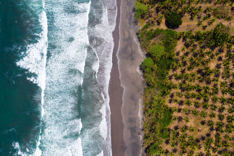 Aerial view of trees by sea