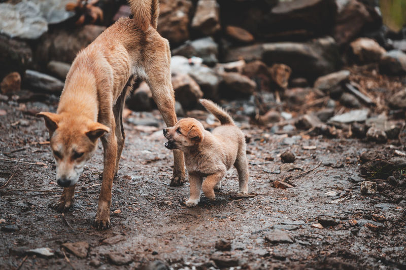 High angle view of mother dog with puppy