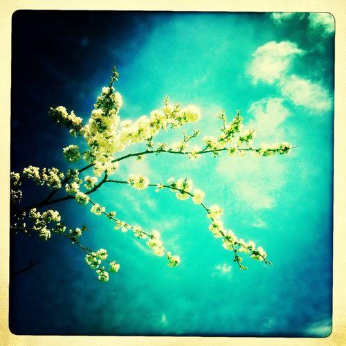 "AMPt - ""Still Life"" (Nature Morte)"