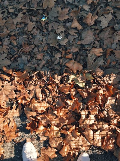 Full frame shot of autumn leaves in water