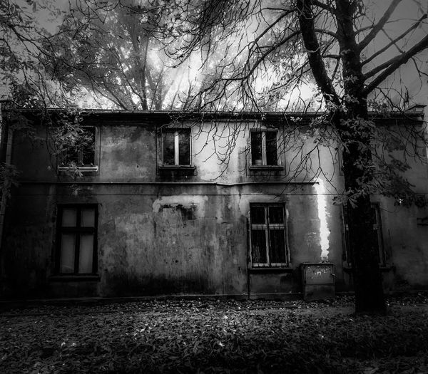 Dom Kamienica Okna Without A Door Architecture Built Structure Building Exterior Building Tree Abandoned Plant House No People Old Window