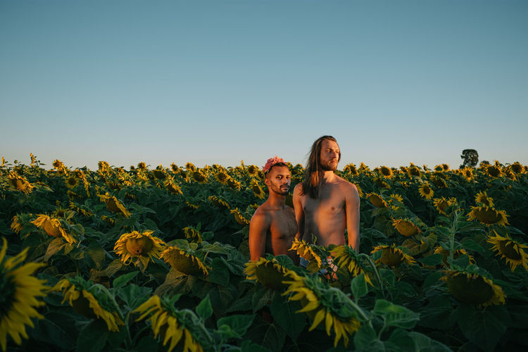 Shirtless gay men looking away while standing amidst sunflowers against clear sky