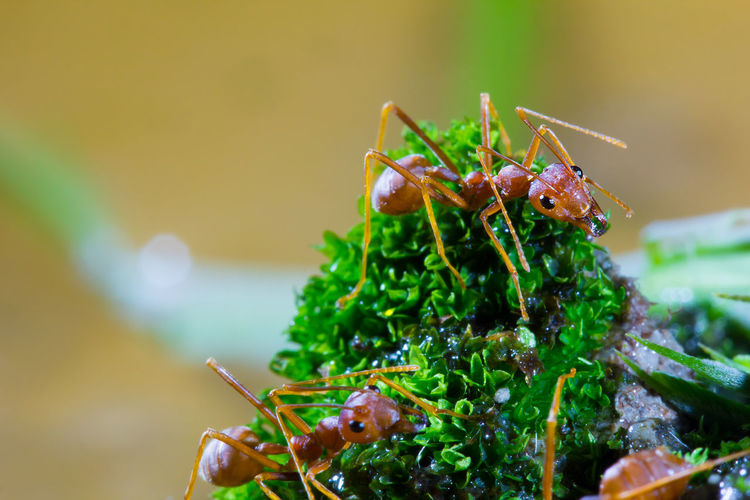 Macro of Green