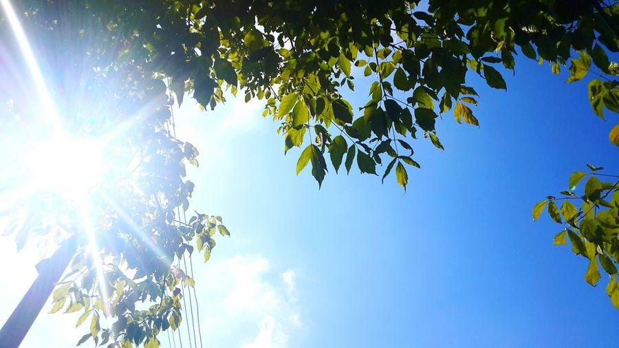 Taking Photos Blue Sky Tree Sun ☀ Photography Trees Sunnyday 🌸🌷🌿 Happydays😎