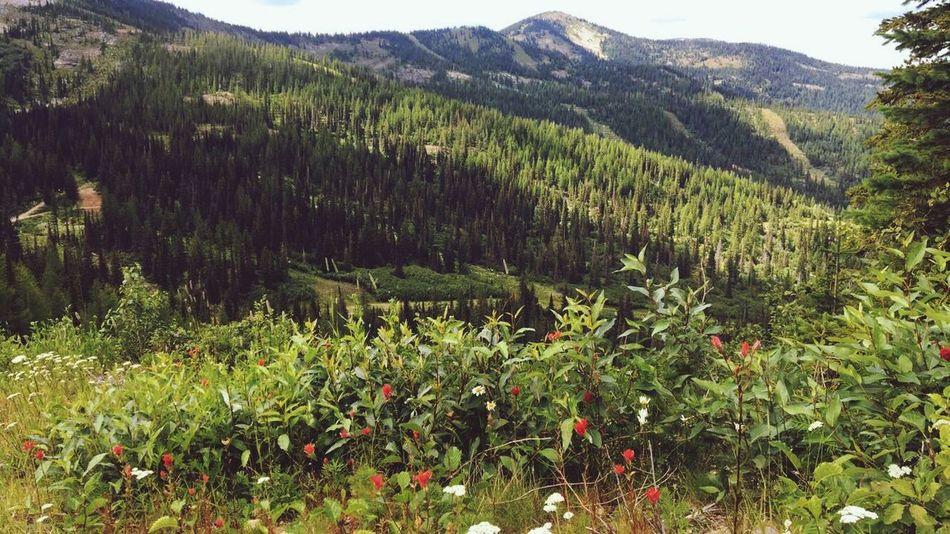 Schweitzer Mountain Resort Schweitzer Mountain Sandpoint Idahome Nature Huckleberry Mountain