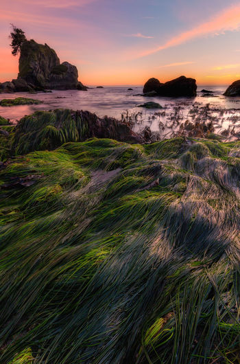 Tonight's sunset from the Pacific Northwest. Evening Light Pacific Pacific Northwest  Beach Beachphotography Beauty In Nature Day Evening Evening Sky Evening Sun Grass Horizon Over Water Landscape Nature No People Outdoors Pacific Ocean Rock - Object Scenics Sea Sky Sunset Tranquil Scene Tranquility Water