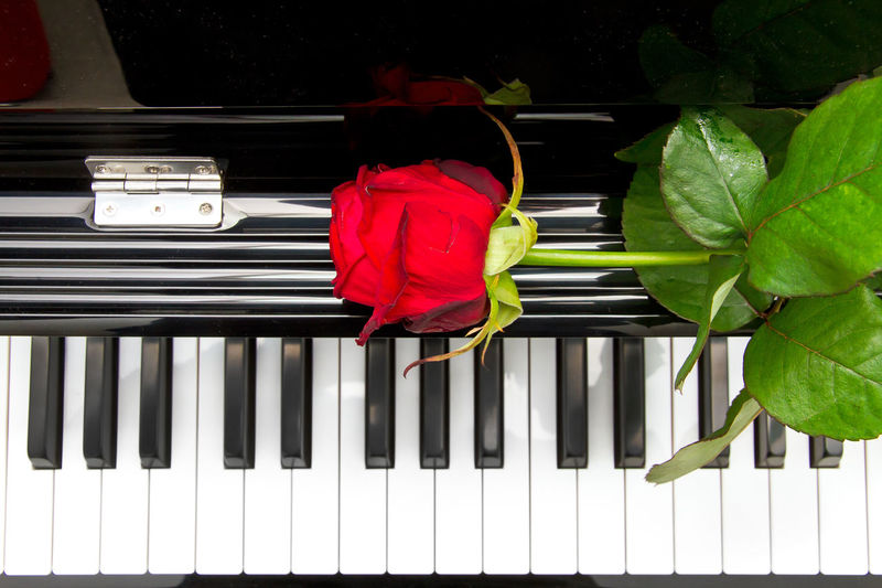 Backgrounds Ballade Birthday Car Classic Concert Flower Green Greetings Jazz Keyboard Keys Love Love Song Music Musician Má Nobody Piano Play Red Romance Romantic Rose🌹 We