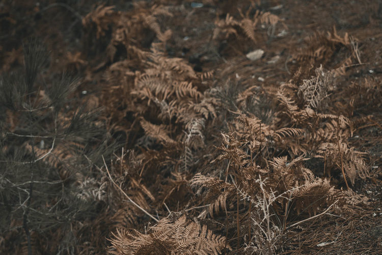 Full frame shot of dried plants on field