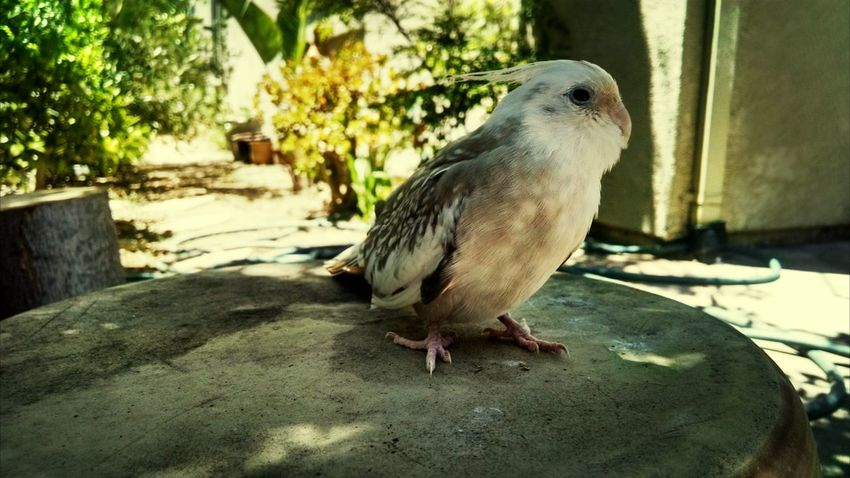 From earlier today, meet my lil' friend My Pet Fly Birdy Fly My Dear Friend
