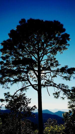 Taking Photos San Sebastian Del Oeste Forest Mountain_collection