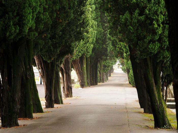 The Way Forward Treelined Tree Diminishing Perspective Green Color Tranquil Scene Walkway Tranquility Green Beauty In Nature Nature In A Row Eyeemphoto Capture The Moment Eyeemphotography Nature Autumn Collection Autumn🍁🍁🍁 Autumn Colors Autumn Cypress Cypress Tree Cypresshill