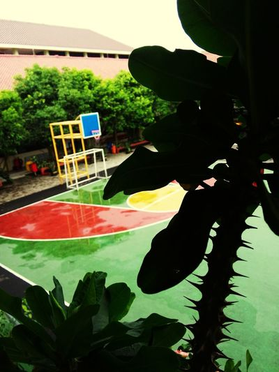 School After The Rain Silhouette Plant Basketball Ring
