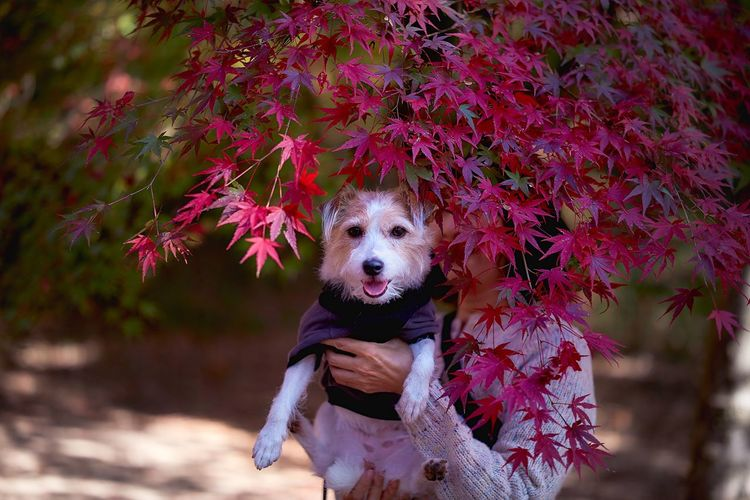 Woman holding dog by plant during autumn