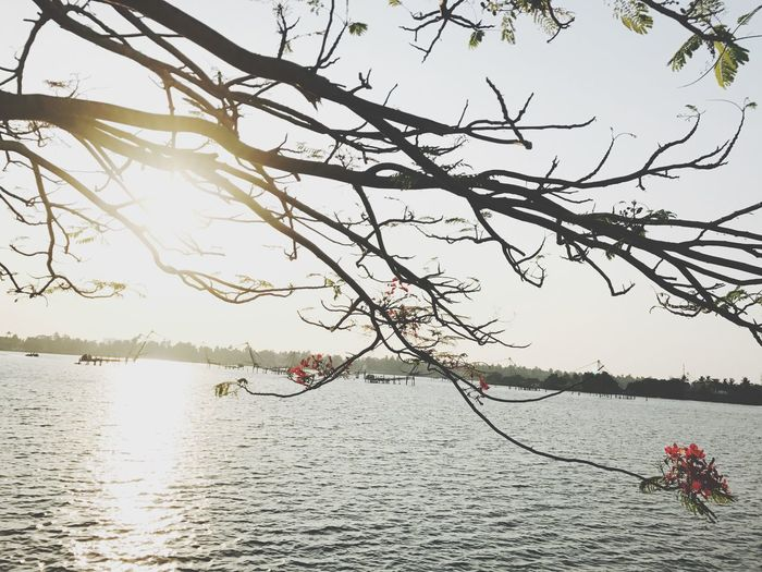 Water Nature Tree Lake Nautical Vessel Beauty In Nature Branch Bare Tree Sky Mobility In Mega Cities Colour Your Horizn EyeEmNewHere
