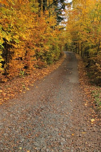 Czech Republic Autumn Autumn Collection Change Day Diminishing Perspective Direction Fall Footpath Forest Leaf Leaves Nature No People Orange Color Outdoors Road The Way Forward Tranquility Tree
