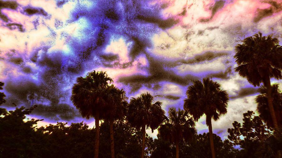 """Marble Skies"" The Innovator Bright Color Sunlight Lighting Light Palm-tree Palmtrees Trees Marble Marbleskies Marble Skies Sky Colors Indigo Clouds Fine Art Photography"