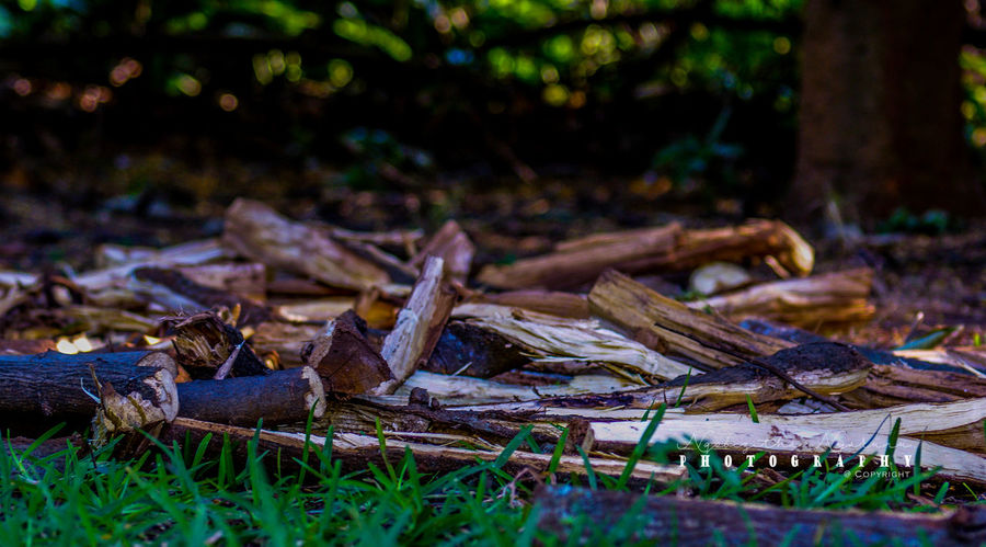 Forest Tree Land Wood - Material Nature Log Wood Deforestation Firewood Selective Focus Outdoors Timber Campfire