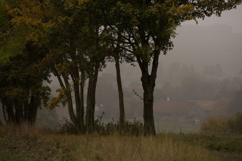 Foggy Day 2 Autumn Day Fall Beauty Focus On Foreground Foggy Foggy Day Grass No People Outdoors Tranquility Tree Trees In A Row Village View