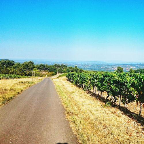 Outandaboutonthebike Provence