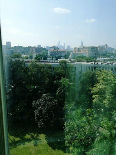 Tree Sky City Life Collegedays Boring Class Beautifulsunshine