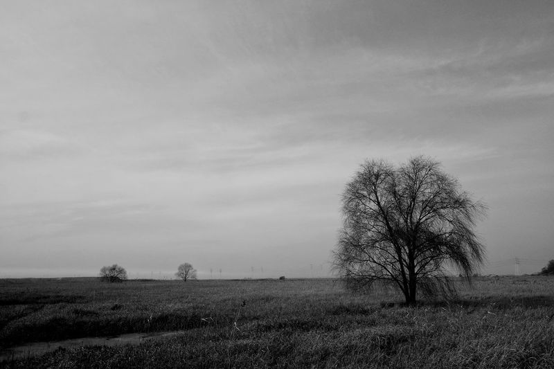 Tree Field Nature Landscape Sky No People Beauty In Nature Bare Tree Outdoors Lone Day Finding New Frontiers Blackandwhite Black & White Landscape_photography Alonetraveler Sky And Clouds Lieblingsteil Miles Away