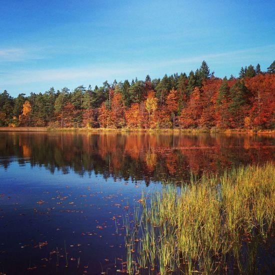 Lake in sweden, vittsjö. Enjoying The View Vittsjönu Landscape_Collection Nature