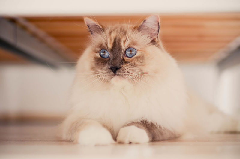 Close-up of cat sitting on floor