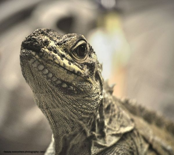 Lizard lovely Reptile Animals In The Wild One Animal Animal Wildlife Animal Themes Lizard Focus On Foreground Close-up Nature Portrait