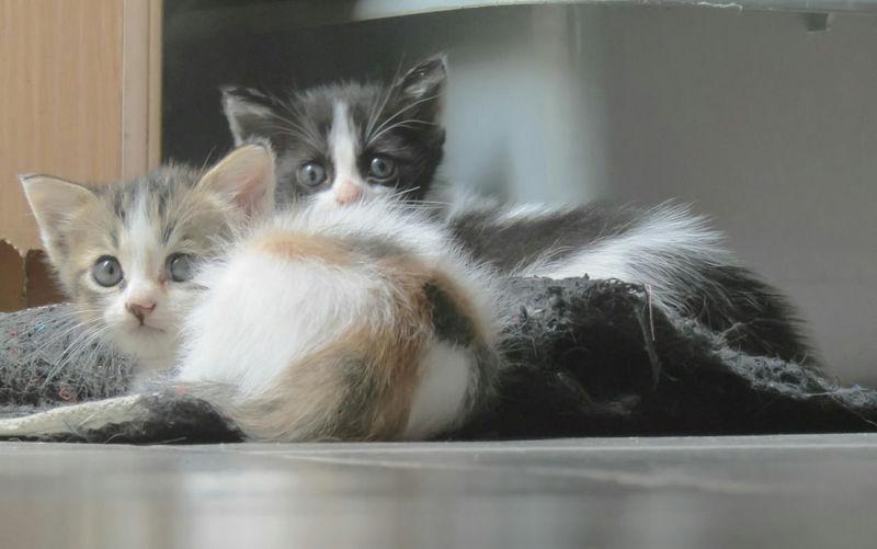 Close-up portrait of cat sitting