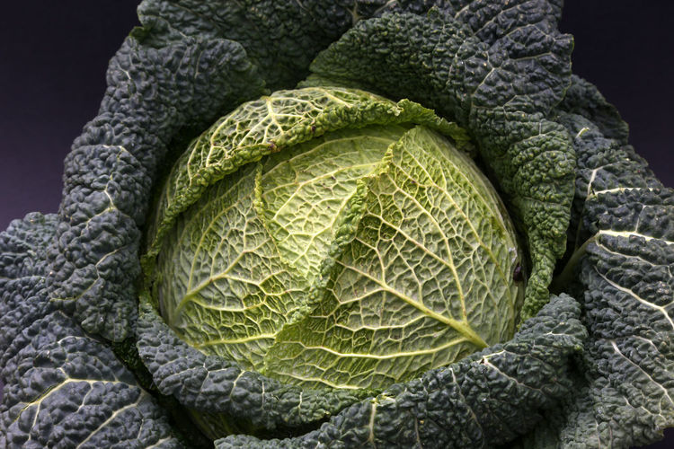 Savoy cabbage details close-up on dark or white background Cabbage Outdoors Wirsingkohlblatt No People Savoy Cabbage Green Color High Angle View Savoy Cabbage Leaf Healthy Eating Freshness Focus On Foreground Wirsingkohl Pattern Vegetable Close-up Savoy Backgrounds Food And Drink Directly Above Flat Lay Flatlay Plant Food Growth Textured