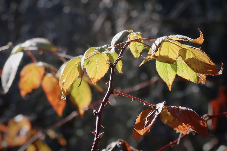 Close-up of plant growing on tree during autumn