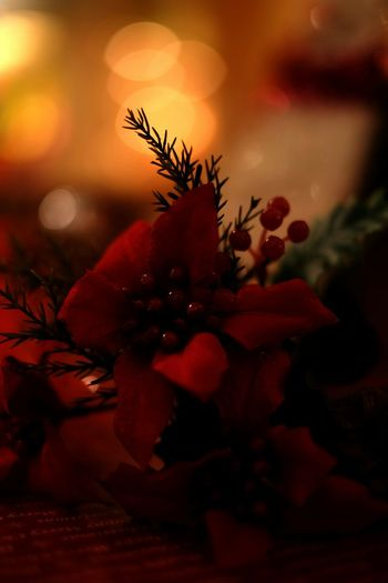 It's almost Christmas✨ Christmaslights Flower Taking Photos Light And Shadow Getting Inspired Eyeemphotography Creativity Getting Creative Fujixm1 Bokeh Light Glitters Christmasillumination Showcase: November My Best Photo 2015