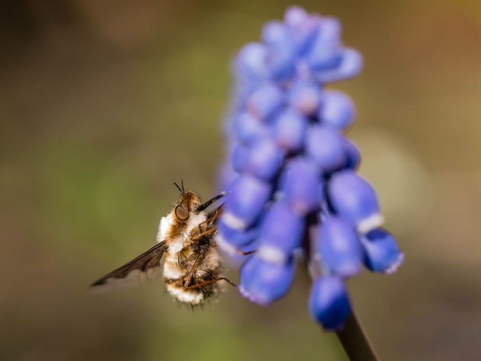 Animal Themes Animal Wildlife Animals In The Wild Beauty In Nature Bee Blooming Buzzing Close-up Day Flower Flower Head Focus On Foreground Fragility Freshness Growth Insect Nature No People One Animal Outdoors Petal Plant Pollination Purple Wollschweber