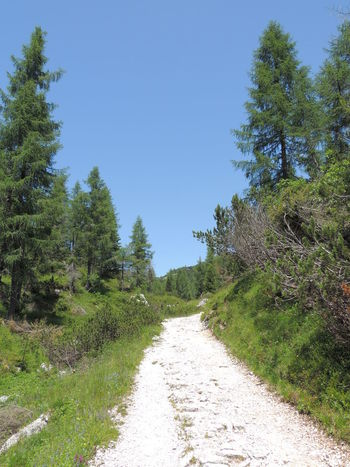 Mountainroad Mountains Nature Photography Road Trees Trees And Nature Trees And Sky Treescollection Walkway Whiteroads