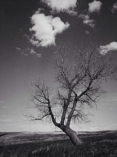 black and white Landscape #Nature #photography EyeEm Bnw Blackandwhite #myfamilyhunt trees black and white