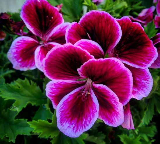 Flower Petal Beauty In Nature Nature Plant Growth Flower Head Close-up Outdoors Freshness No People Fragility Day Petunia