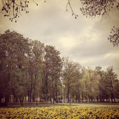 💛 Tree Sky