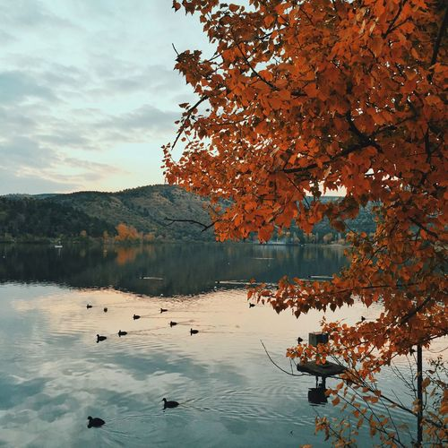 Showcase: November Autumn Fall Traveling Check This Out Hello World Taking Photos Relaxing Enjoying Life VSCO Travel Photography Nature Photography Huffington Post Stories EyeEm Best Edits The Week Of Eyeem EyeEm Best Shots TheWeekOnEyeEM EyeEm Nature Lover Ankara Turkey Beautiful Nature