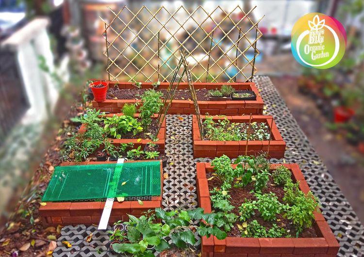 แปลงผักในเมือง รออีกสักเดือนสองเดือนจะงามกว่านี้ สวนในเมือง ต้นไม้ ต้นไม้สวย ปลูก สวน ชาวสวน Garden Plants 🌱 ผัก Vegetable
