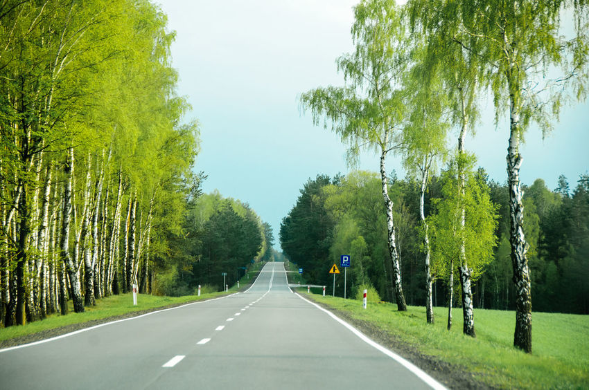 Road between trees Beauty In Nature Day Daylight Forest Grass Green Color Light Lines Looking Forward Nature No People Outdoors Road Signs Tarmac Trees