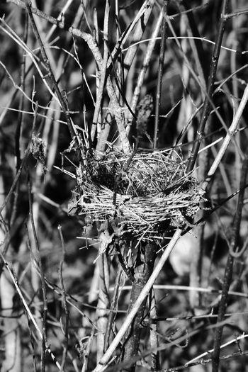 Nest Nesting