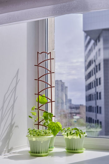 Potted plant on table by window against building