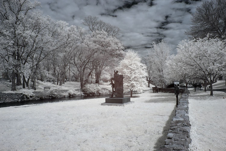Cold Temperature Tree No People Nature Plant Day Infrared Infrared Photography Reading Pennsylvania Pennsylvania Museum Canon Canonphotography Canon_photos Canon 6D Canon6dmarkii Blue