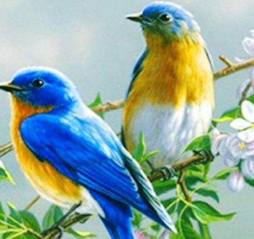 ويك اند سعيد ان شاء الله 🤗🌻❤️🌷👍 Happy Time Happy Day Outdoors Animals In The Wild Bird No People Smile ✌ Young Adult Ksa😍 Style ✌