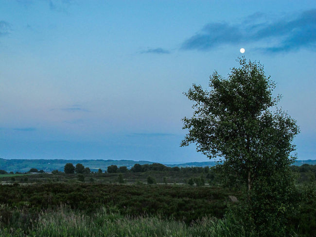 Norland Moor Moon Moonlight Landscape POV Nature Photography Yorkshire Twillight Naturelovers Nature On Your Doorstep Naturephotography Windy Moor Moorland Wild Cottongrass Cotton Grass Cloudscape Clouds And Sky Tree Grass Skyporn Sky 43 Golden Moments Moors Taking Photos